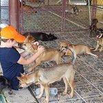 Having fun with the puppies at Soi Dog Foundation Phuket