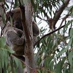 صورة فوتوغرافية لـ Flinders Chase Visitor Centre