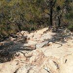 Mount Coorooraの写真