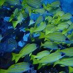 Photo de BASE Diving Centre Ltd