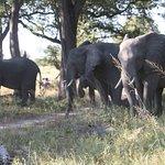 Herds of elephant