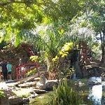 Foto de Jardim Japonês