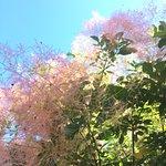 Photo de Painswick Rococo Garden