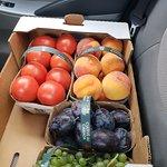 Van de Laar Orchards resmi