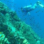 Foto de Ocean-Pro Mirihi - Day Trips