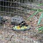 Foto Salisbury Zoo