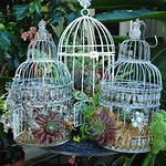 Foto de Phoenix Perennials and Specialty Plants Ltd.