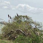 Zdjęcie Bundala National Park
