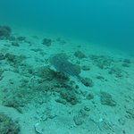 Diving in Trincomalee!