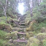 Enchanting spot on the Cape Broyal Trail. If fairies emigrated from Ireland, they would be here: