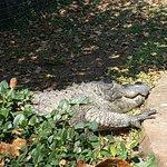 Foto de Perry's Bridge Reptile Park