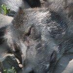 Foto di Lakota Wolf Preserve