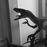 Evolutionsmuseet Paleontologi i Uppsala