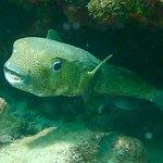 Sea Monkeys Water Sportsの写真
