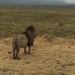Serengenti