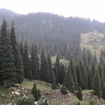 Alpen Rose Εικόνα