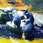 EcoWorld Aquarium and Wildlife Rehabilitation Centre Foto