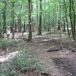 Congaree National Park照片
