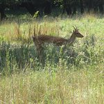 Riserva Naturale di Popolamento Animale Vincheto di Celarda fényképe