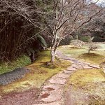Billede af Makaranga Botanical Garden