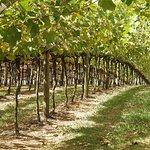 Vinhos Micheletto