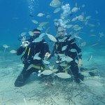 Bild från Blue Fin Divers Naxos Greece