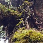 Mossy Forest Foto