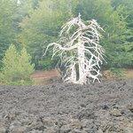 Photo of Etna Wild
