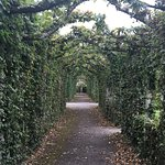 Part of the Hornbeam arbour in Birr Castle garden.