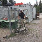 Billede af Snowy Owl Sled Dog Tours