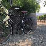 Tedeschi Family Wineryの写真