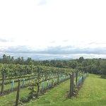 Au Vignoble d'Orford照片