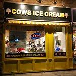 Cowsの写真