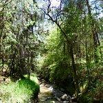 Photo de Rancho San Martin Lavanda