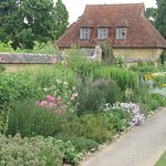 Herbaceous border in July
