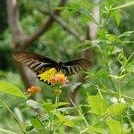 鳳園蝴蝶保育區の写真