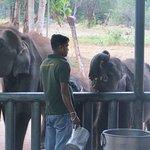 Photo of Udawalawa Elephant Orphanage