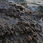 Foto Vasilikos Beach
