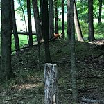 Pete's Pond Preserve照片