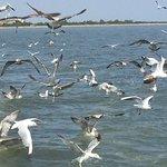 Motonave Albatros Foto