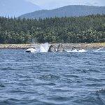 Billede af Alaska Galore Tours