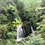 Photo of Skyline Eco Adventures - Akaka Falls