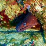 Bild från Nautilus Diving Center