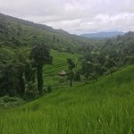 Фотография Good Morning Thailand Tours: Eco Treks and City Cycling Tour