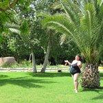 Под пальмами