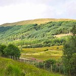 Фотография Tyndrum Community Woodland
