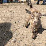 Foto de Ostrich Ranch