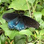 Butterflies of Cape Cod Photo