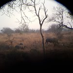 Ảnh về Wild Wings Safaris