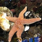 Bilde fra Maréis, Sea Fishing Discovery Centre